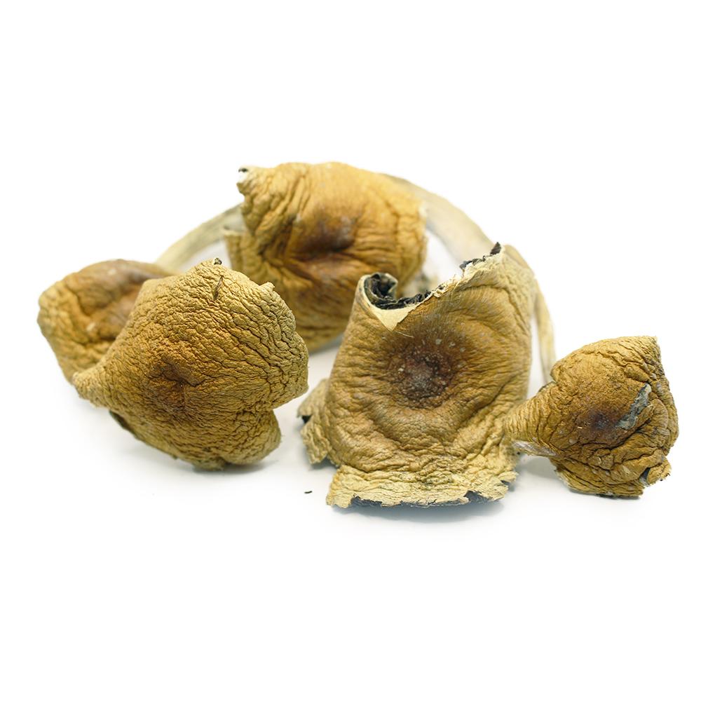 Big-daddy-magic-mushrooms