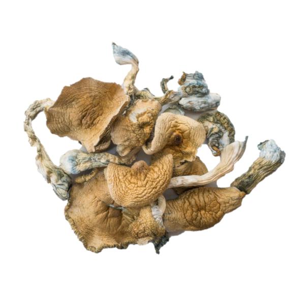 Golden Teachers Magic Mushrooms