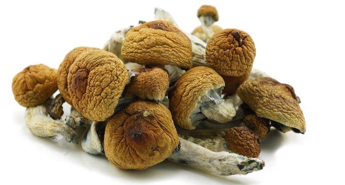 magic mushrooms Canada 5